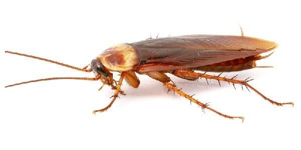 طرق مكافحة الصراصير في المنزل بطريقة آمنة والتخلص من الصراصير للأبد