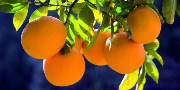 نصائح عند زراعة أشجار الفاكهة 672287f0e06891f79b5d0172154b41fa