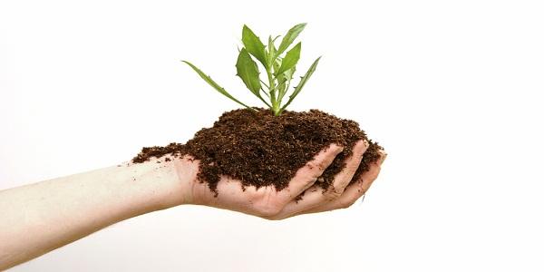 Organic vs chemical fertilizer