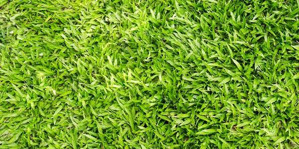 طريقة زراعة العشب في حديقتك البديل