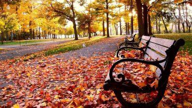 السر وراء تغير وسقوط أوراق الشجر في فصل الخريف